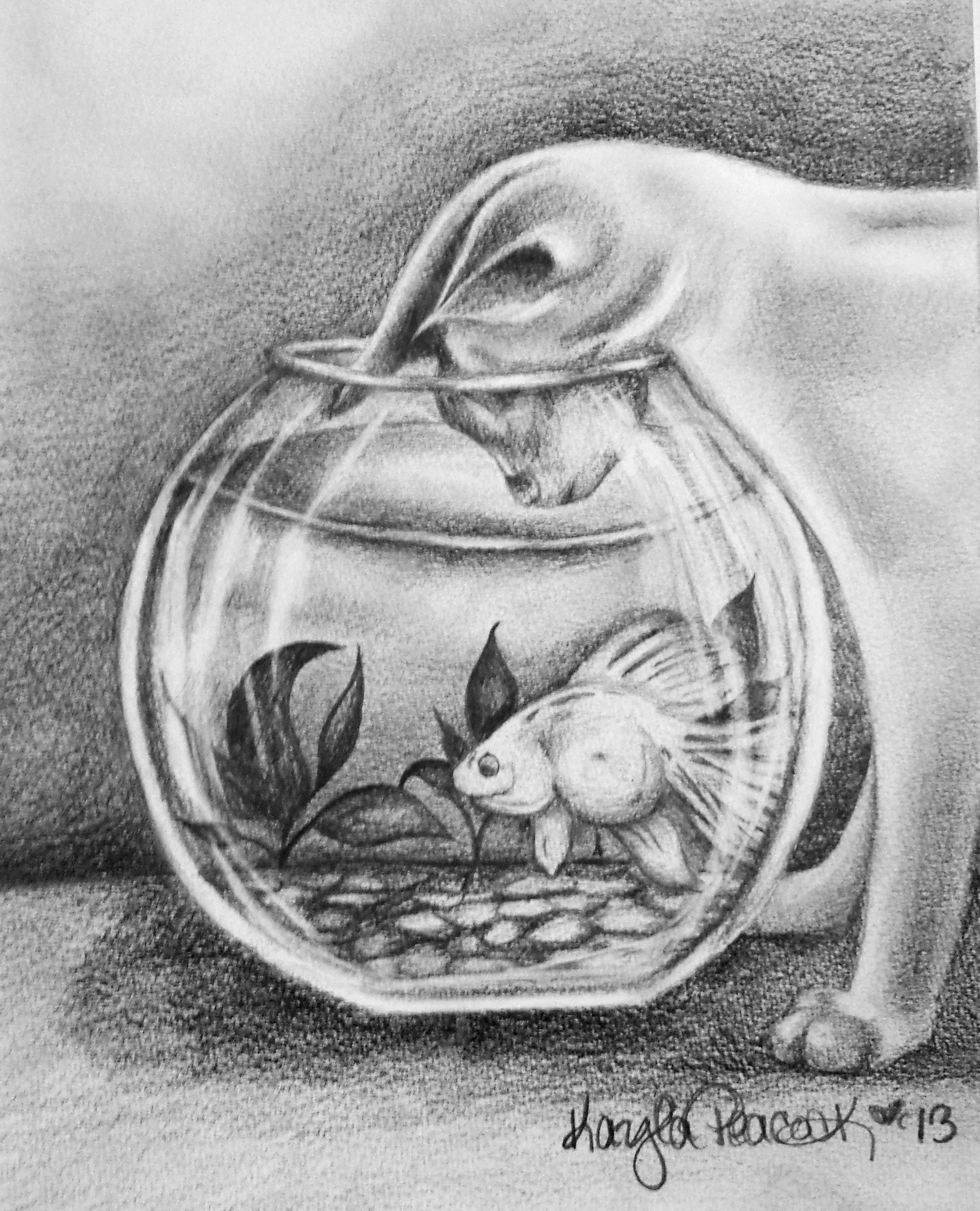 Drawn fish The Sketchbook Cat Fishbowl shading