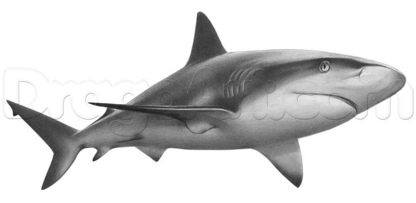 Drawn animal shark #9