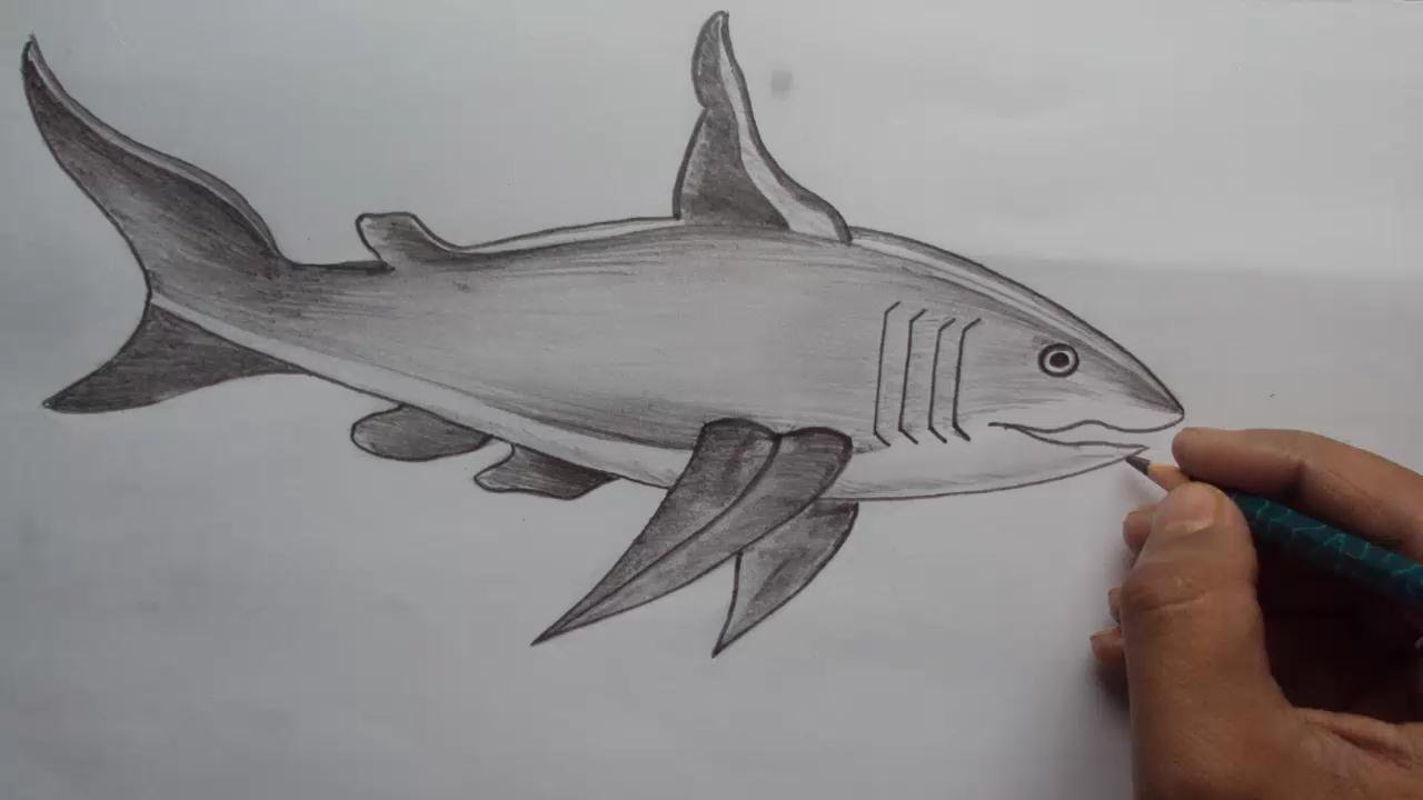 Drawn shark pencil White a to with