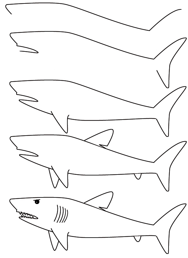 Drawn shark step by step DrawingHow  to draw Draw