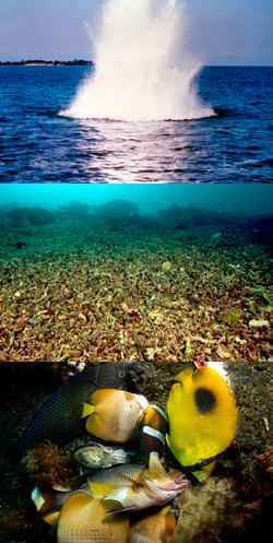 Drawn fishing school Blast bombs Threats Reef Top: