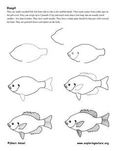 Drawn fishing school How Exploring cartoon animals Bluegill