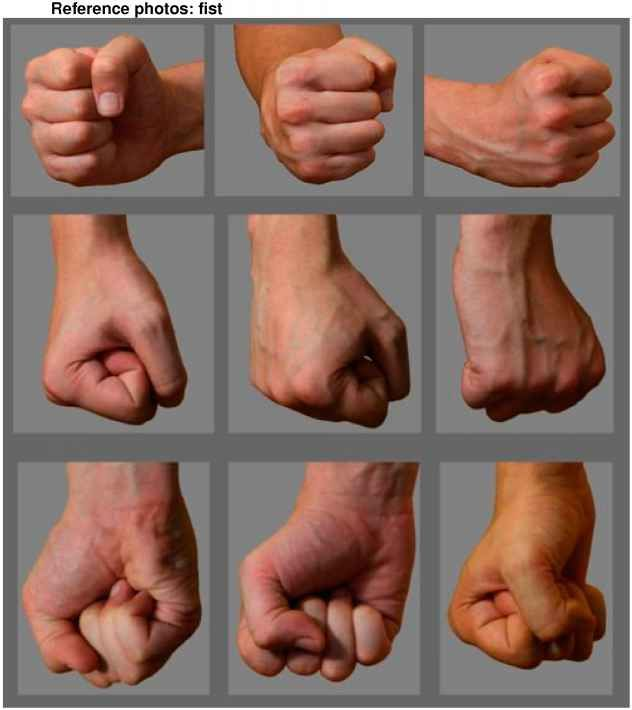 Drawn fist hand reference ReferenceDrawing Result for Anatomy 16
