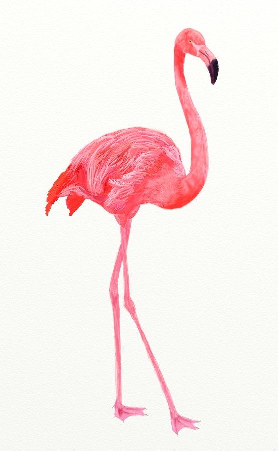 Drawn flamingo #8
