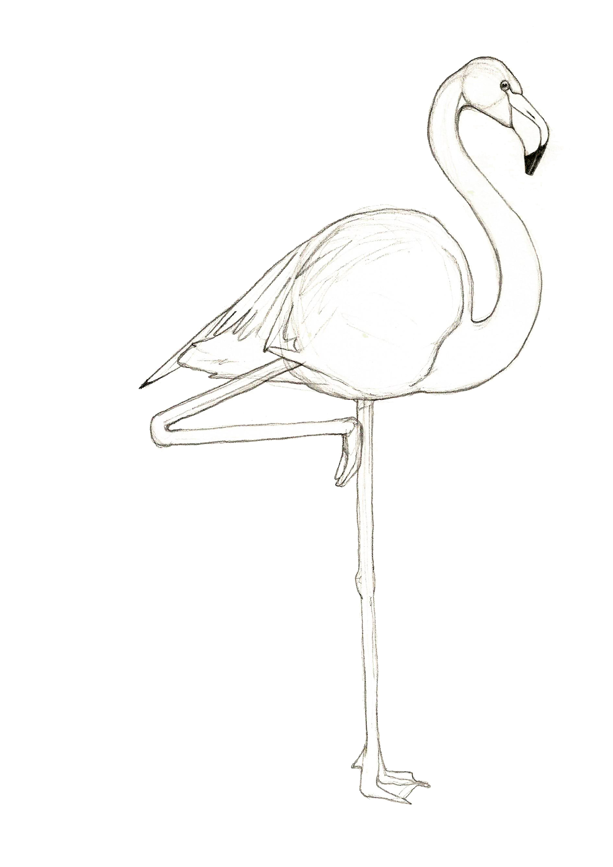 Drawn flamingo #14