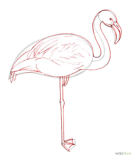 Drawn animal flamingo #4