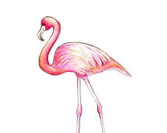 Drawn flamingo #3