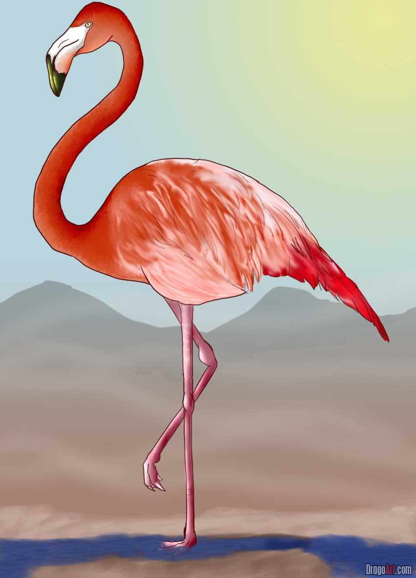 Drawn animal flamingo #3