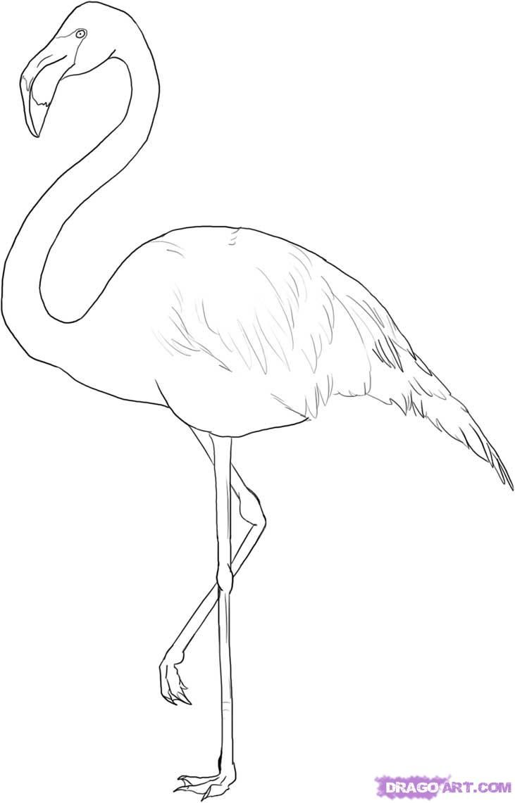 Drawn animal flamingo #1