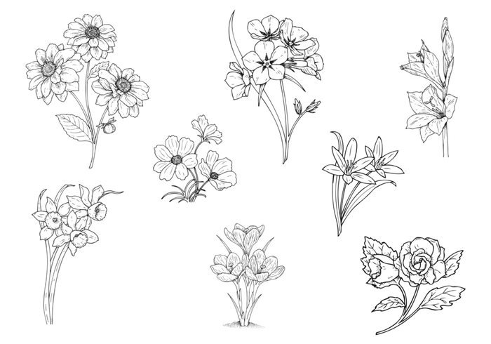 Drawn flower Pack Two Brushes at Flower