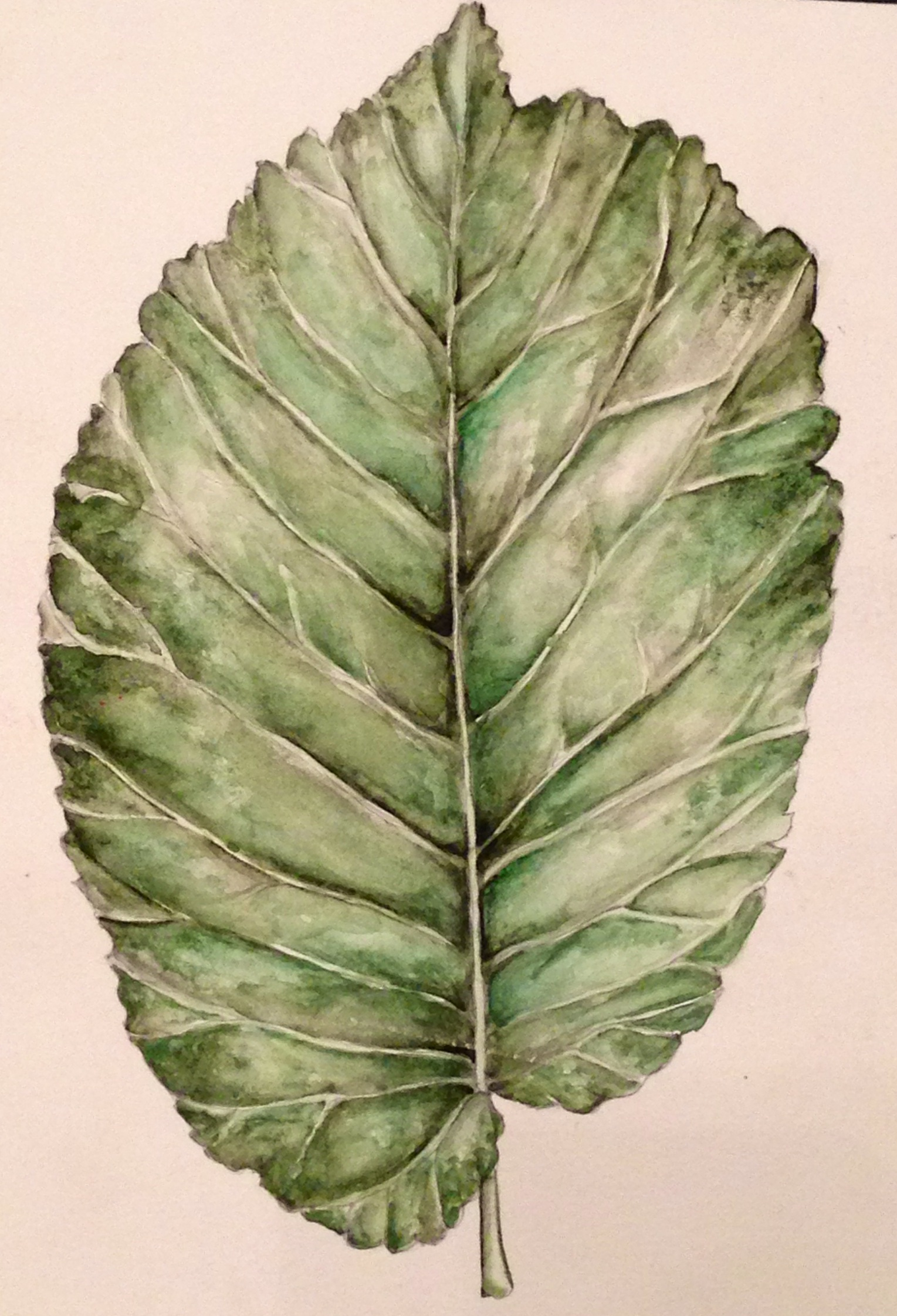 Drawn leaves painting First pencil  of my