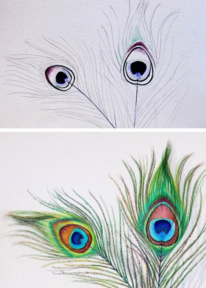 Drawn peafowl pencil drawing To Peacock a draw how