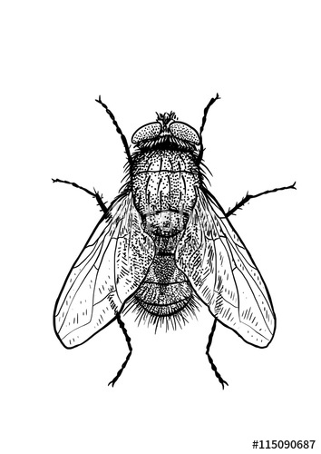Drawn insect #15