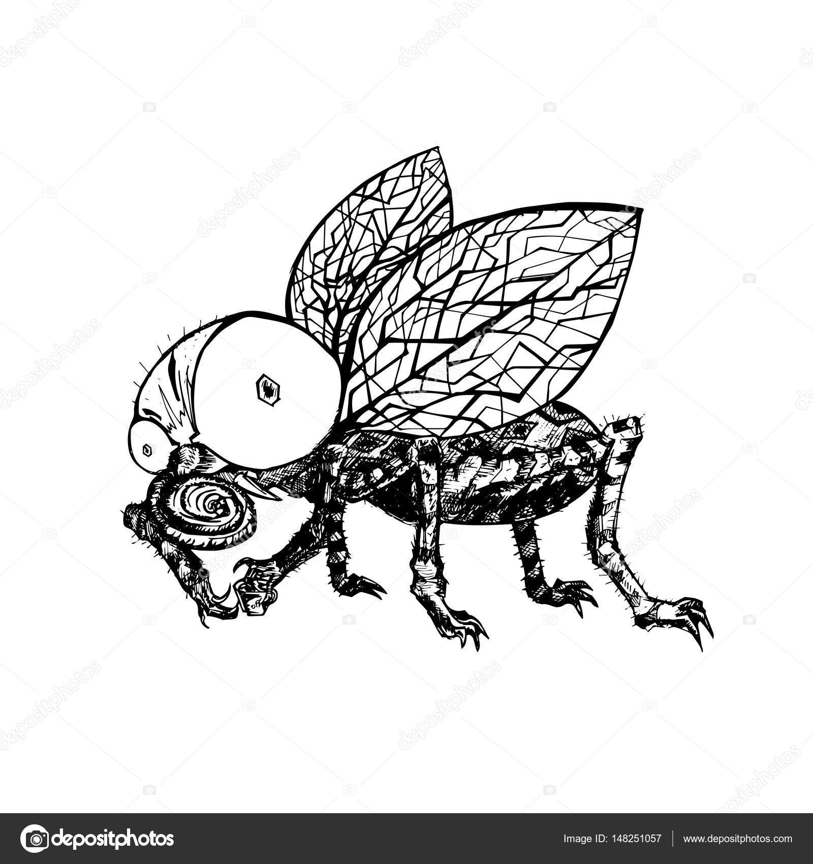 Drawn fly Drawn Vector fly — fly