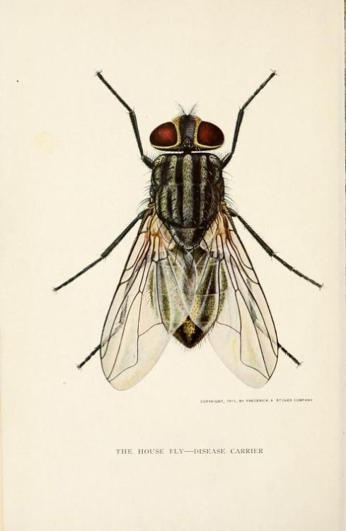 Drawn fly Fireflies Fly Pinterest images Best