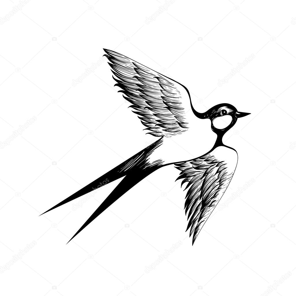 Drawn swallow Hand swallow Vector drawn silhouette