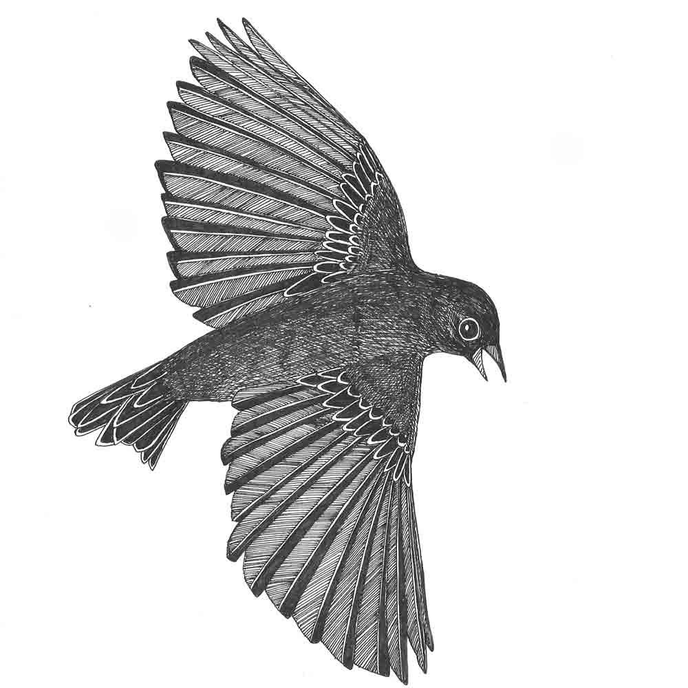 Drawn flying #9