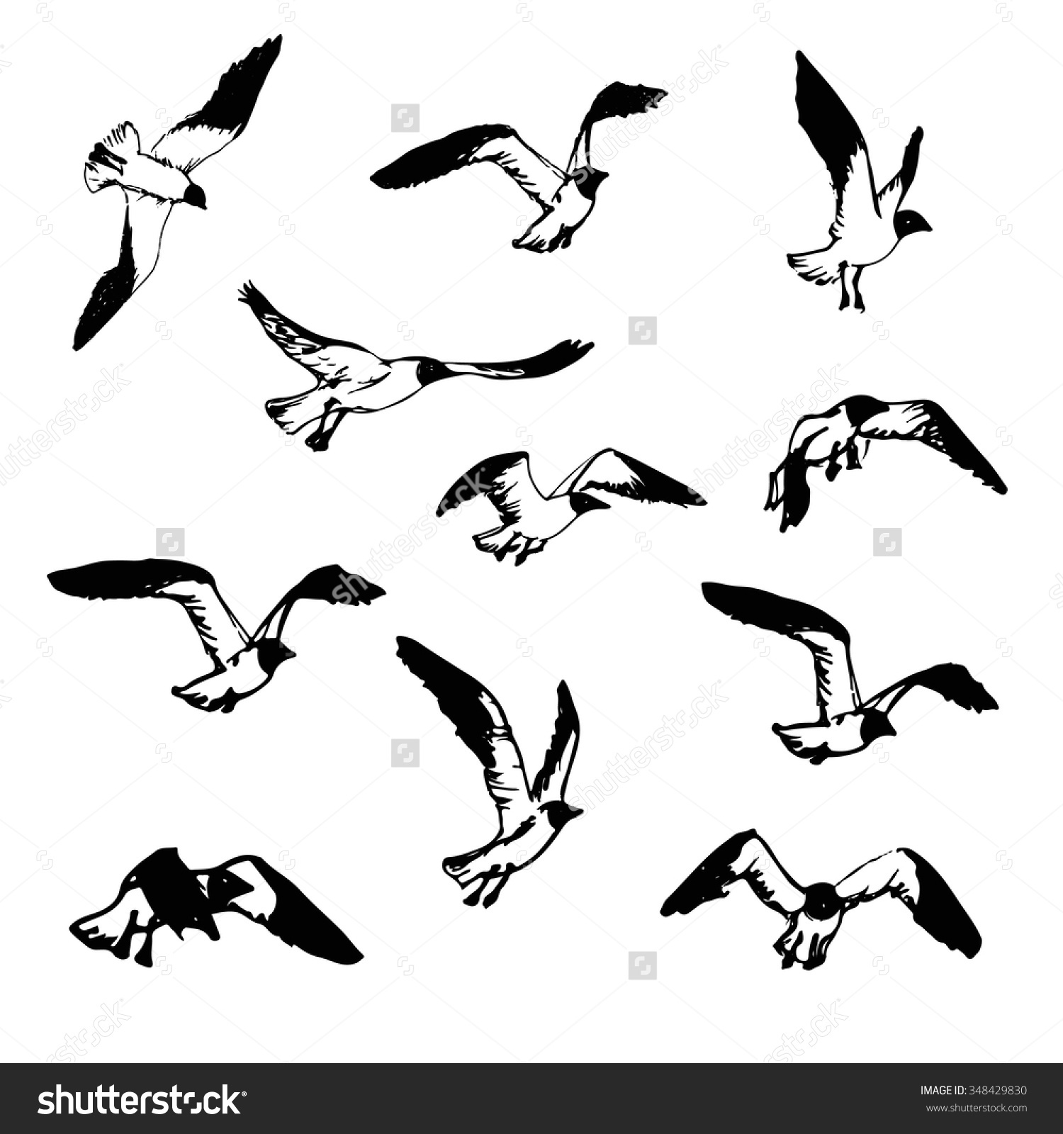 Drawn seagull black and white Illustration Hand And White Drawn