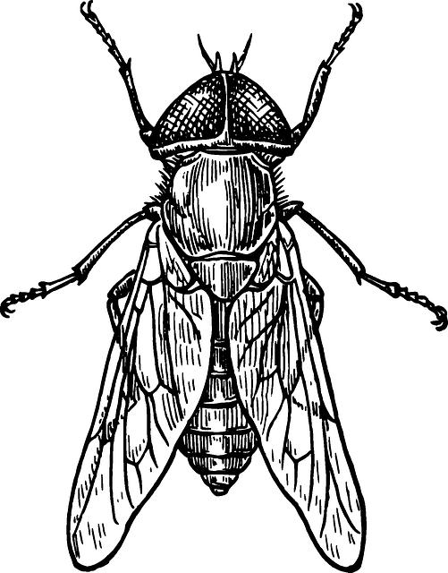 Drawn bug beetle Alas Drawing gratis Insecto DrawingsInsectsClip