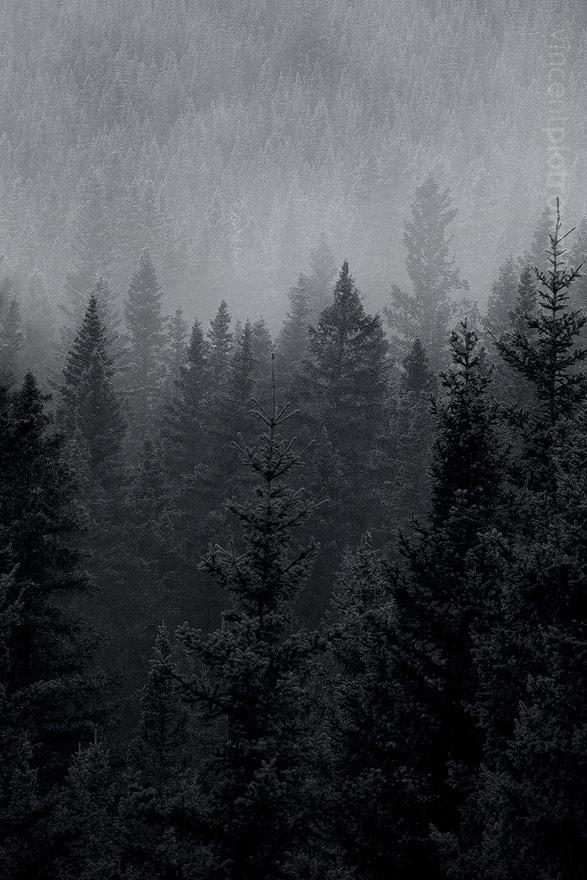 Drawn fog Fog to shots finally kinds