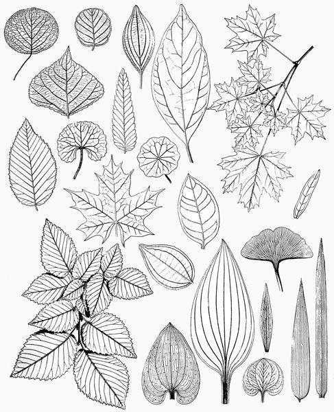 Drawn foliage #7