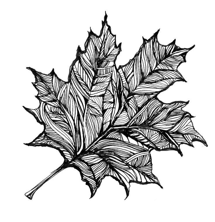 Drawn ivy big leaf #12