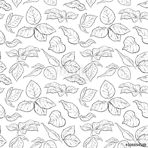 Drawn leaves outline Leaves isolated Monochrome drawn rose