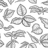 Drawn leaves rose Leaf of with Monochrome seamless