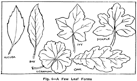 Drawn ivy branch With Drawing and Lessons Leaves
