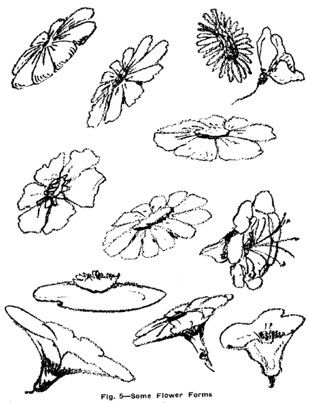 Drawn foliage Drawing Lessons Flowers with Weeds