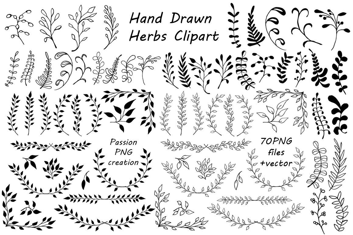 Drawn herbs clip art #9