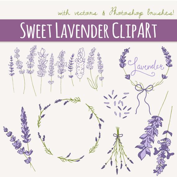 Drawn lavender vector #7