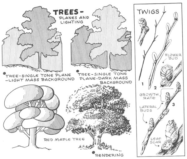 Drawn bush plane tree Leaves Draw lighting planes Bark