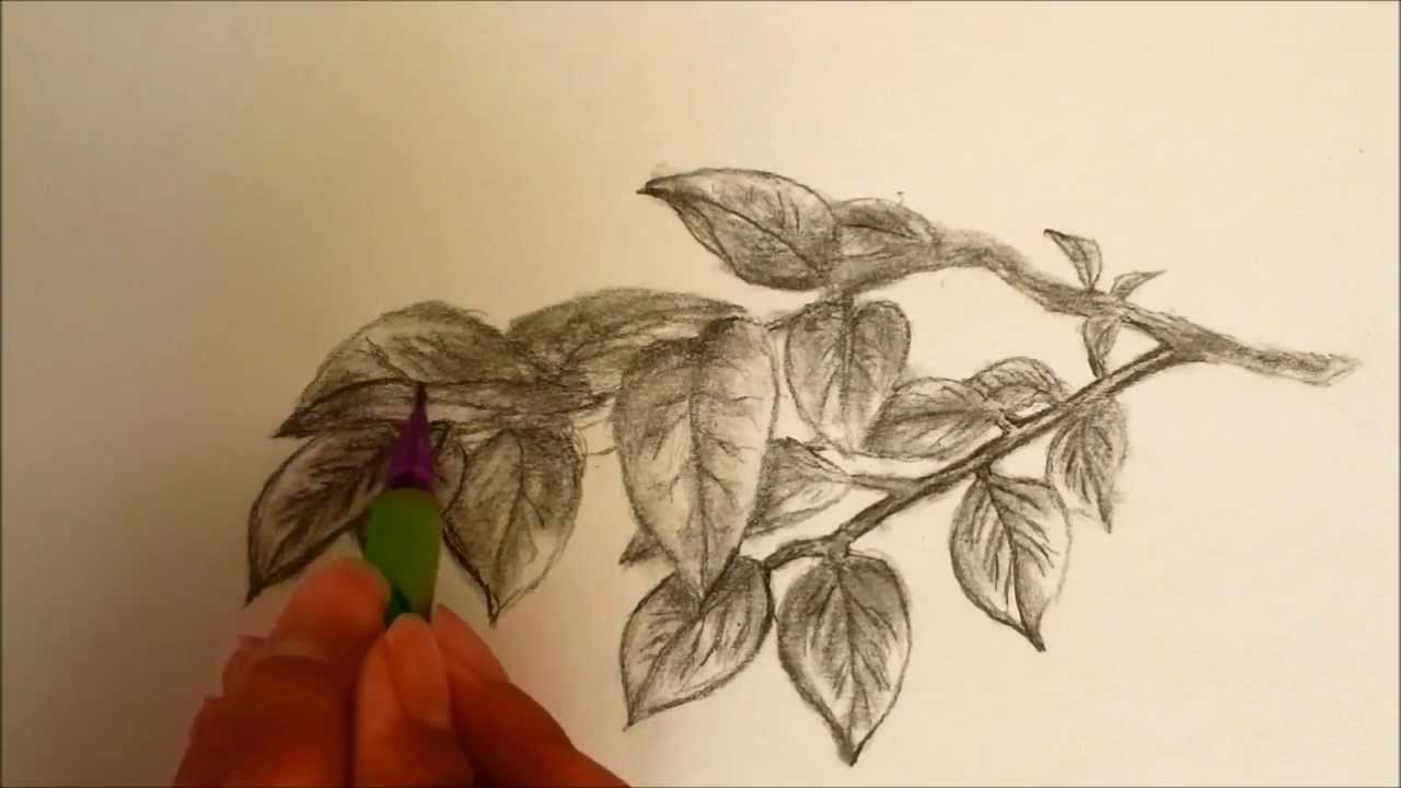 Drawn leaves shaded leaf To How Draw: Leaves