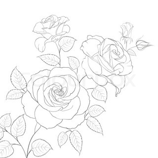 Drawn rose bush two Rose Abstract free  graphic