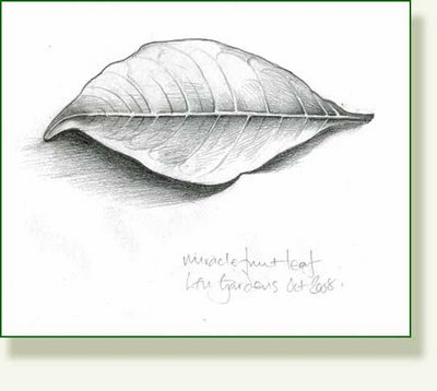 Drawn leaves shaded leaf Drawings Leaves Drawings — Made