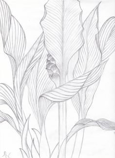 Drawn leaves simple Floral Basics Drawing  Pinterest