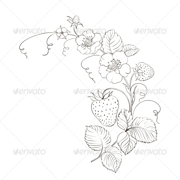 Drawn strawberry strawberry leaf Isolated Tatting Strawberries and Isolated