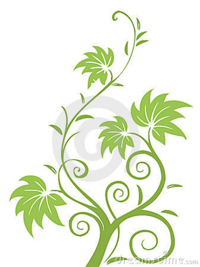Drawn leaves vine leaf And green vines and vines