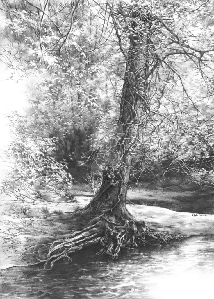 Drawn scenery forest For interior forest ideas Shishkin