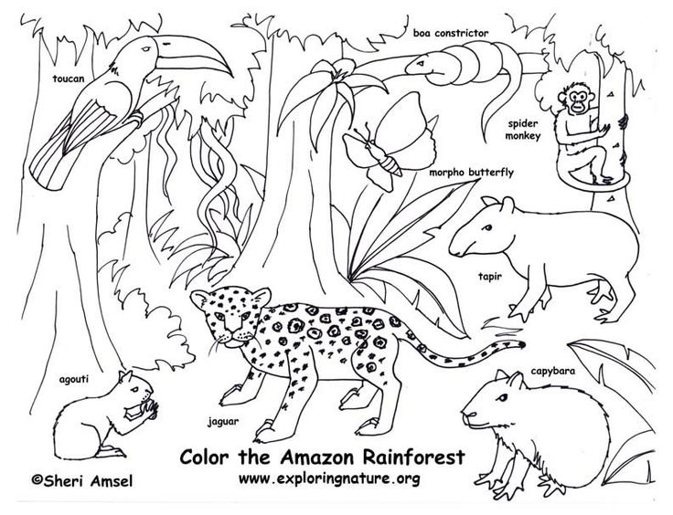 Drawn rainforest amazon forest The pages Coloring best color