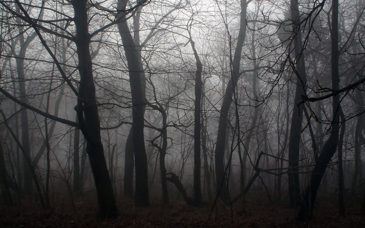 Drawn jungle spooky Dark Forest Wallpapers For Wallpaper