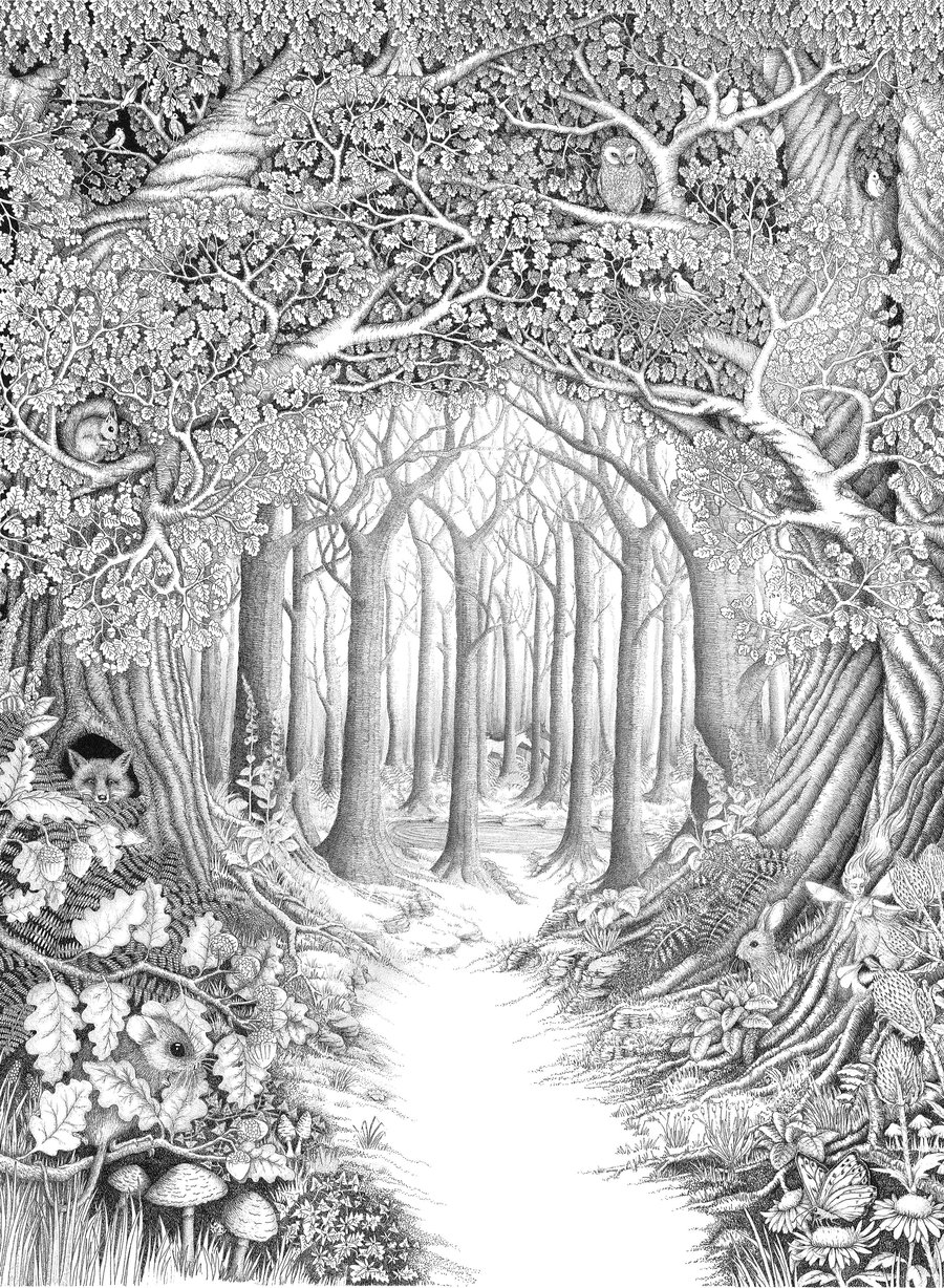 Drawn scenery forest By forest Enchanted forest ellfi