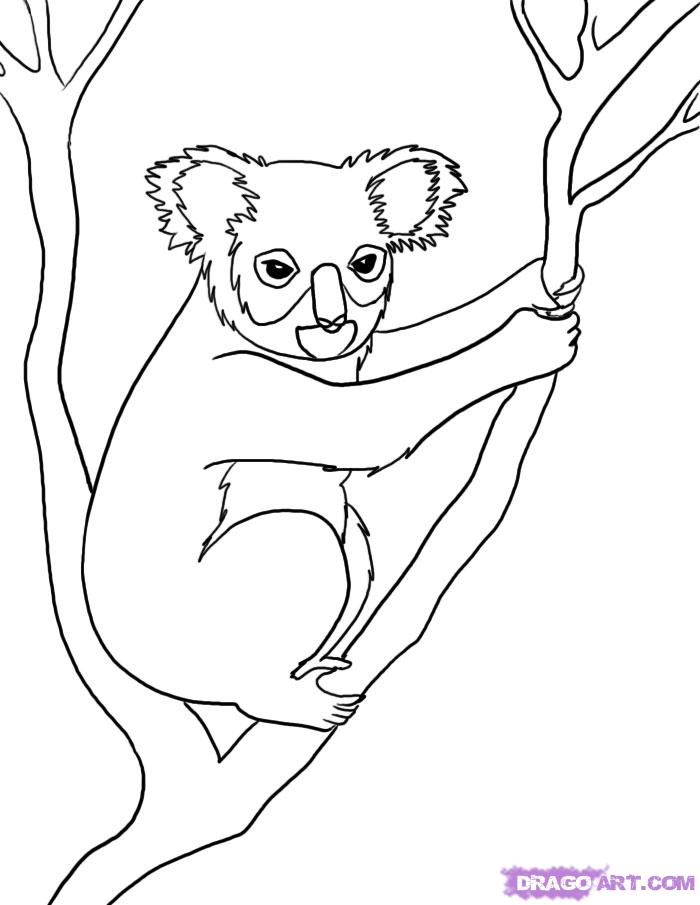 Drawn rainforest jungle Forest Forest drawing photo#3 Animals