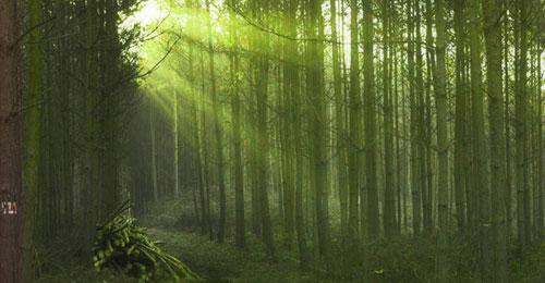 Drawn background forest Scenes  Forest Digital Illustrative