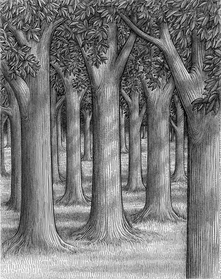 Drawn tree forest tree Draw this on drawing Find