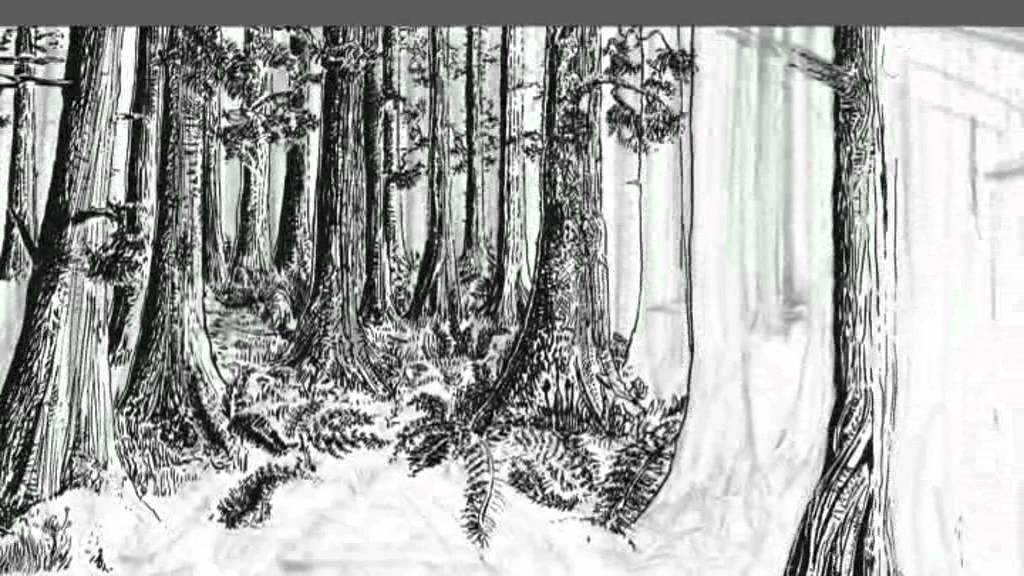Drawn rainforest pen and ink Lapse) Natural Draw: to How