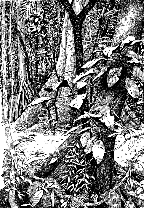 Drawn rainforest forest floor The – bcishannontrail2001 Plein and