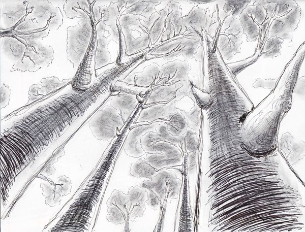 Drawn scenery perspective Perspective by perspective point 1