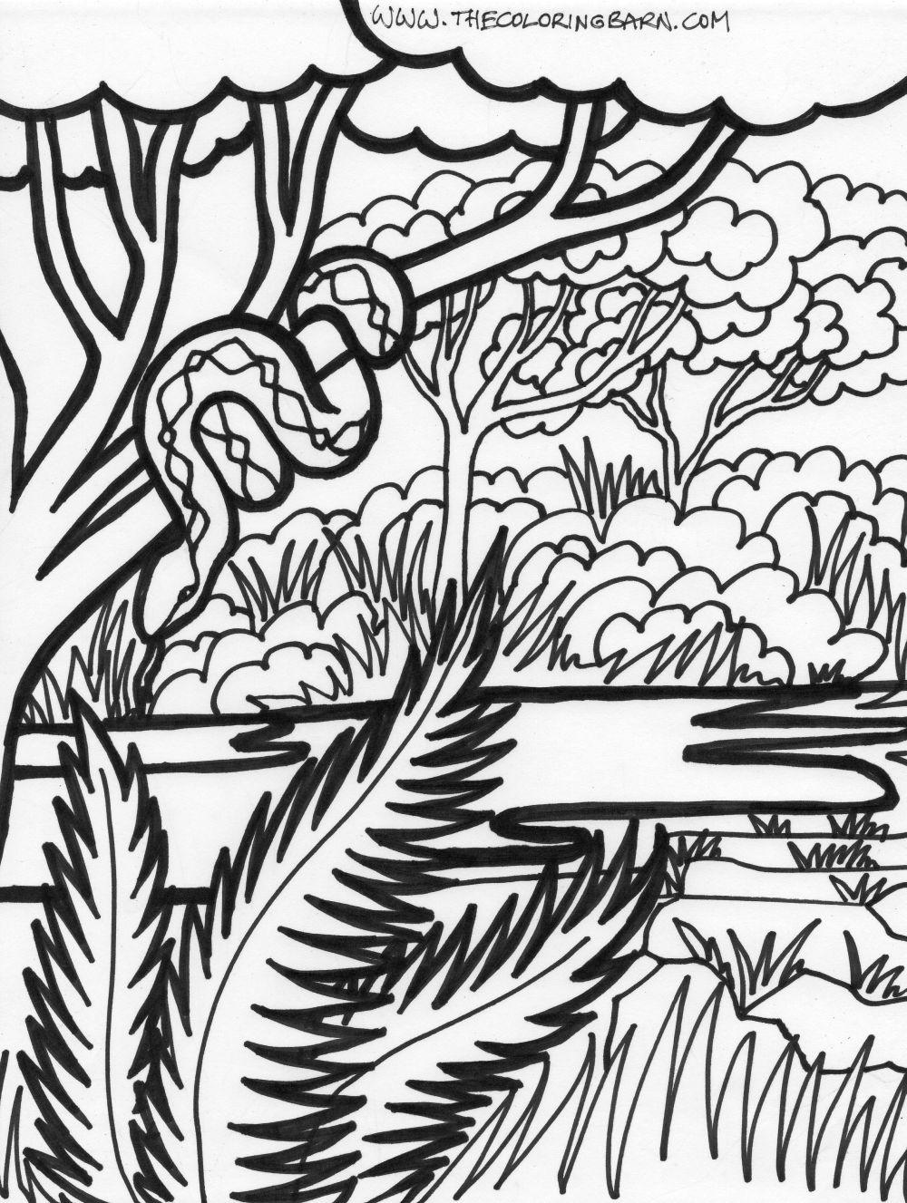 Drawn rainforest jungle safari Page scene coloring jungle page